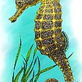 Pacific Seahorse by Roger Hall