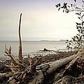 Pacific Vista by Joyce Dickens