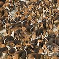 Pack Of Hound Dogs by Jean-Michel Labat