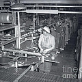Packing Line Cannery Row Monterey Circa 1948 by California Views Archives Mr Pat Hathaway Archives