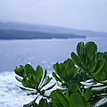 Pailoa Near Mokulehua At Hale 'o Pi'ilani Heiau Maui Hawaii by Sharon Mau