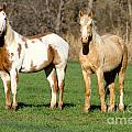 Paint And Palomino Mustang by Krista Wimmer