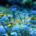 Paint Me Blue by Aimelle