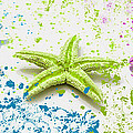 Paint Spattered Star Fish by Mechala Matthews