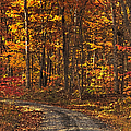 Painted Autumn Country Roads by Lara Ellis