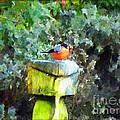 Painted Bullfinch S1 by Vix Edwards