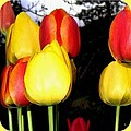 Painted Country Tulips by Will Borden
