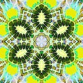 Painted Cymatics 181.66hz by Derek Gedney