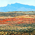Painted Desert by Frank Wilson