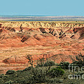 Painted Desert by Suzanne Luft