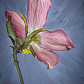 Painted Dogwood by Maggie Magee Molino