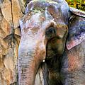 Painted Elephant by Athena Mckinzie
