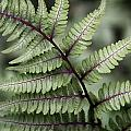 Painted Fern by Sharon Horn