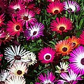 Painted Flowers by Chalet Roome-Rigdon