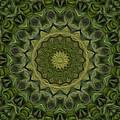 Painted Kaleidoscope 11 by Rhonda Barrett