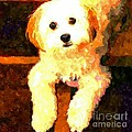 Painted Puppy by Barbara Griffin