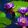 Painted Purple Water Lilies by Kathy Clark