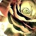 Painted Rose 1 by Tina Vaughn
