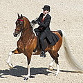 Painted Saddlebred by Alice Gipson