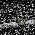 Painted Turtle In A Monochrome World by LeeAnn McLaneGoetz McLaneGoetzStudioLLCcom