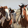 Painted Wild Horses by Athena Mckinzie