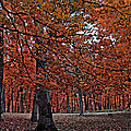 Painterly Style Autumn Trees by Minding My  Visions by Adri and Ray