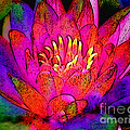 Water Lily Floral