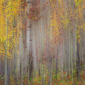 Painting Of Trees In A Forest In Autumn by Ron Harris