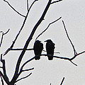 Pair Of Birds In Black by Minding My  Visions by Adri and Ray
