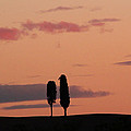 Pair Of Cypress Trees And Morning Sky In Tuscany by Greg Matchick