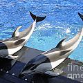 Pair Of Dolphins by Brenda Kean