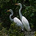 Pair Of Herons by Dale Powell
