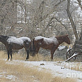 Pair Of Horses In A Snow Storm   #0559 by J L Woody Wooden