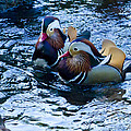 Pair Of Male Mandarin Duck-signed-#8236 by J L Woody Wooden