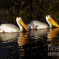 Pair Of Pelicans   #6935 by J L Woody Wooden