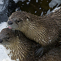 Pair Of River Otters   #1301 by J L Woody Wooden