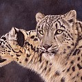 Pair Of Snow Leopards by David Stribbling