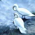 Pair Of Swans by Jutta Maria Pusl