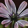 Pale Blue Flower Backlit by Kenny Glotfelty