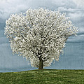 Pale White Tree On Cloudy Spring Day E83 by Wendell Franks