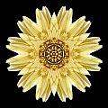 Pale Yellow Gerbera Daisy I Flower Mandala by David J Bookbinder
