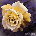Pale Yellow Rose by Barbara Griffin