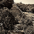 Palenque From The Jungle Panorama Sepia by Weston Westmoreland