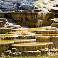 Palette Spring 2 Yellowstone National Park Wy by Dan Hartford