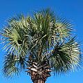 Palm Against Blue Sky by Mike Niday