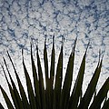 Palm And Clouds by Mark Lemmon