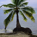 Palm At The Edge Of The Sea Number Two by Heather Kirk