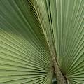Palm, Belize Botanic Garden by William Sutton