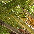 Palm Blossoms by Katerina Naumenko