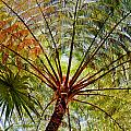 Palm Canopy by Jim Thompson